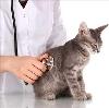 Ветеринарные клиники в Топчихе